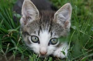 foto-kat-maken